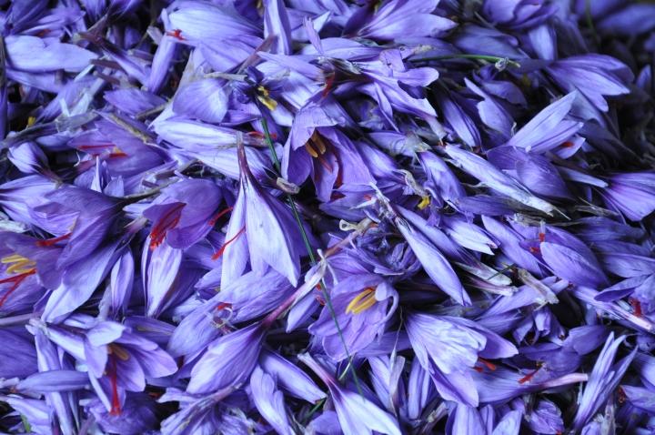 saffron 7
